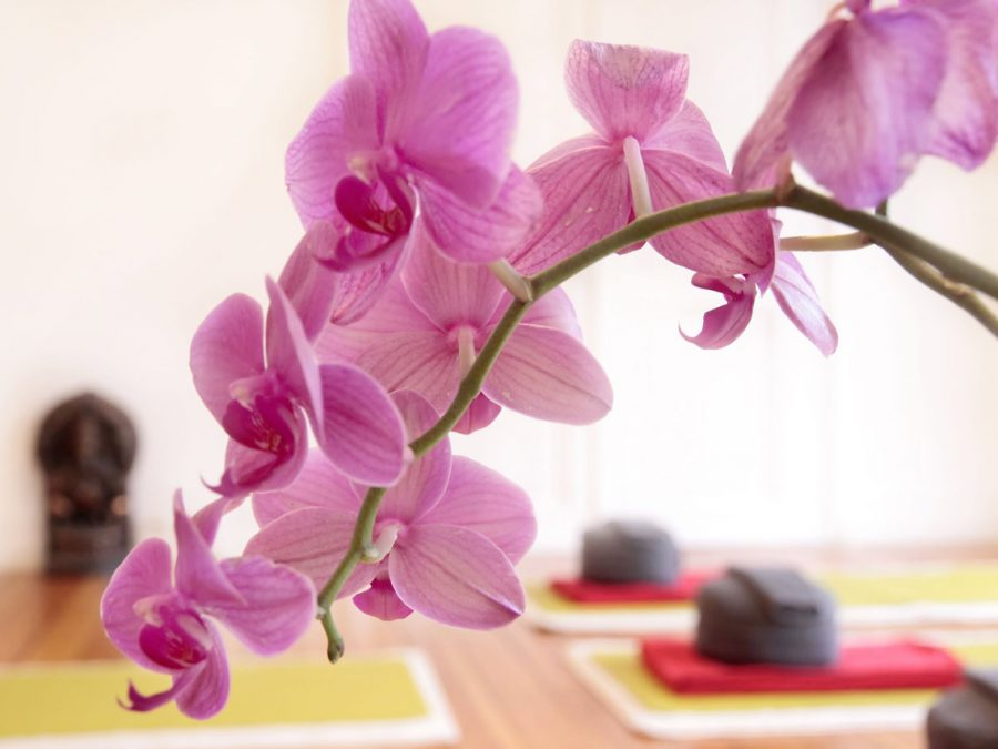 Mindfulness Yoga Therapies | Integrative Medical Institute